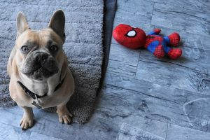 French bulldog toys 2020