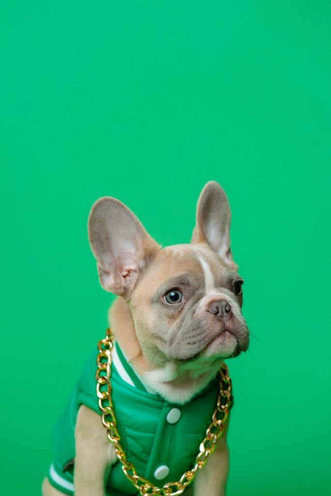 cute names for a french bulldog