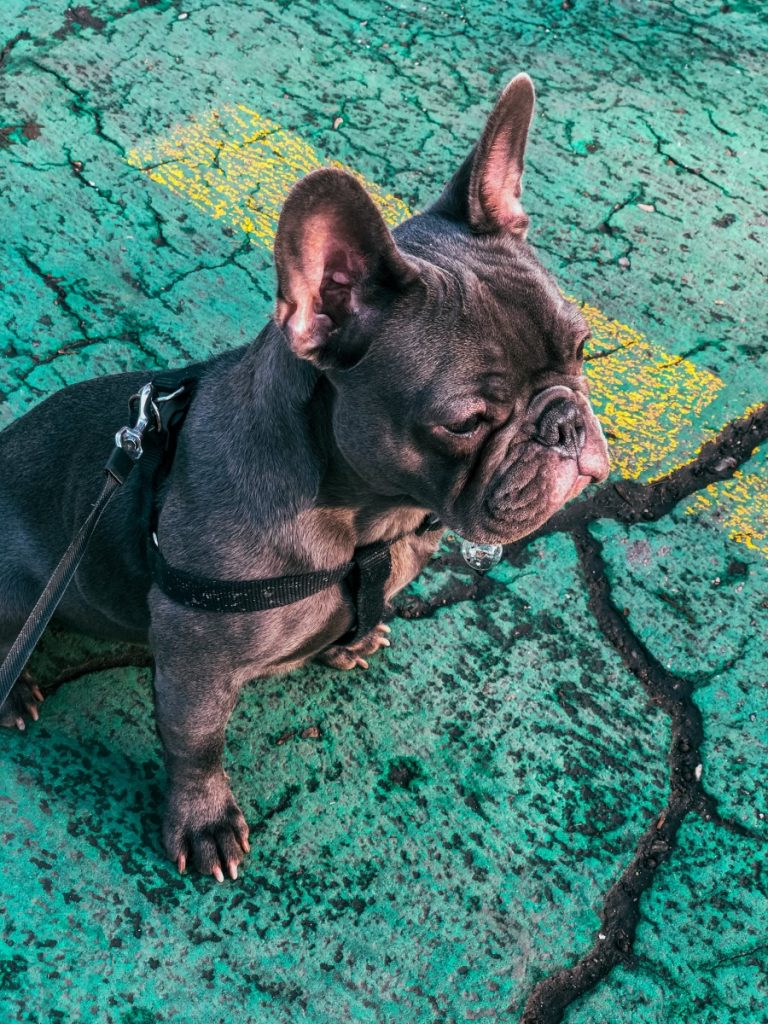 Cute name for a french bulldog